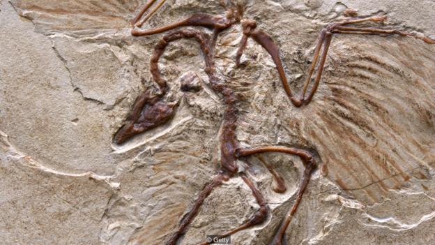 死后能不能变成化石由不得你 但能人为加大几率