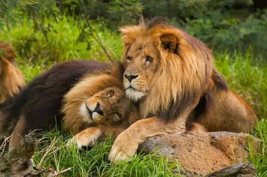 动物同性恋泛滥 科学家:都是因为爱