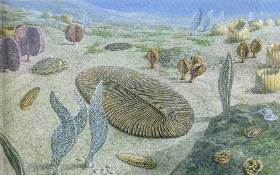 生物多样化从何而来?可能与一堆虫子有关